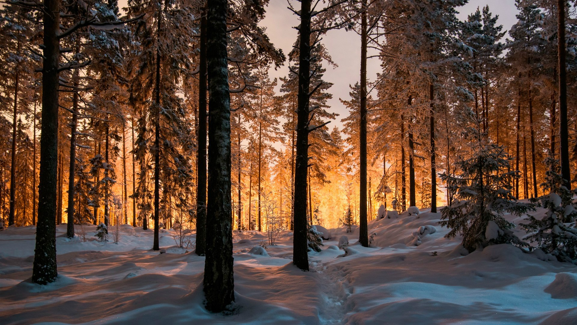 фото зимний лес сказочный